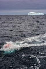 Airgun Iceberg
